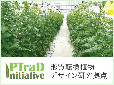 形質転換植物デザイン研究拠点|PTraD
